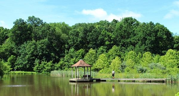 Font Hill Wetland park