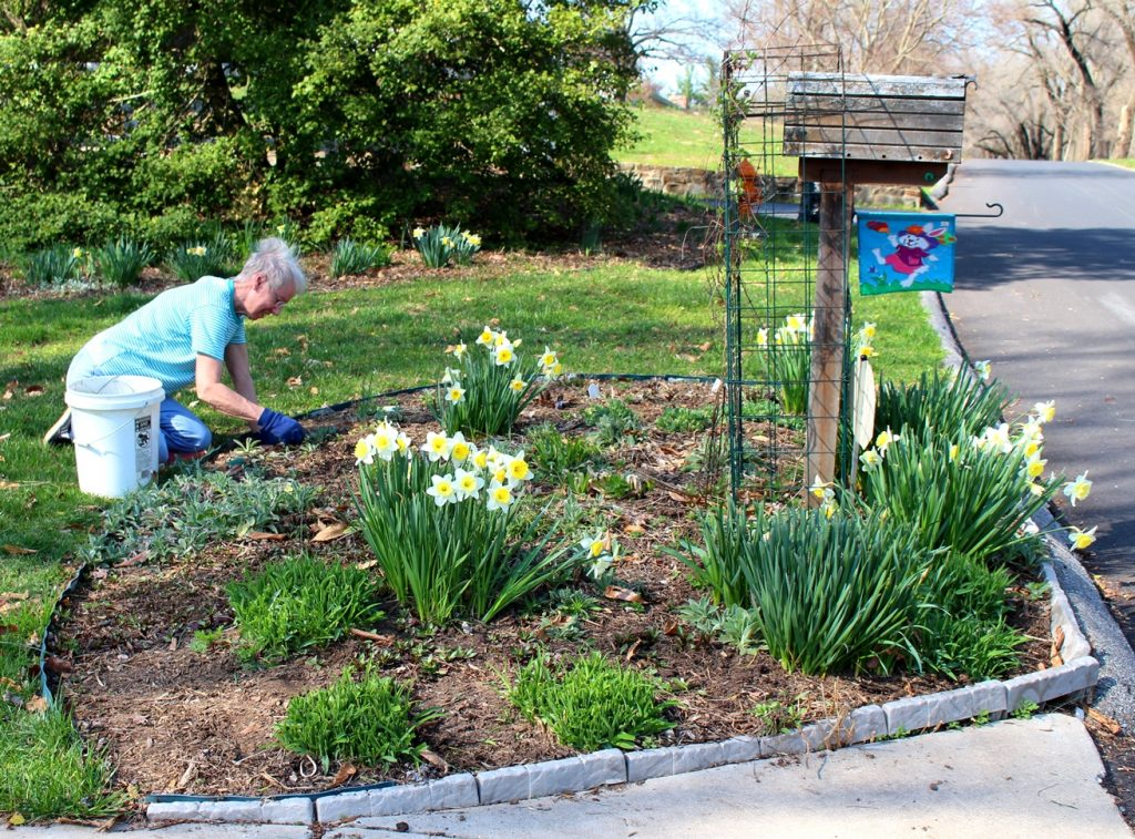 woman planting her spring garden