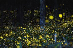 field full of fireflies