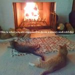two cats in front of the fireplace watching the fire burn