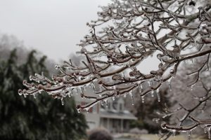 tree branch encased in ice - storm 2019